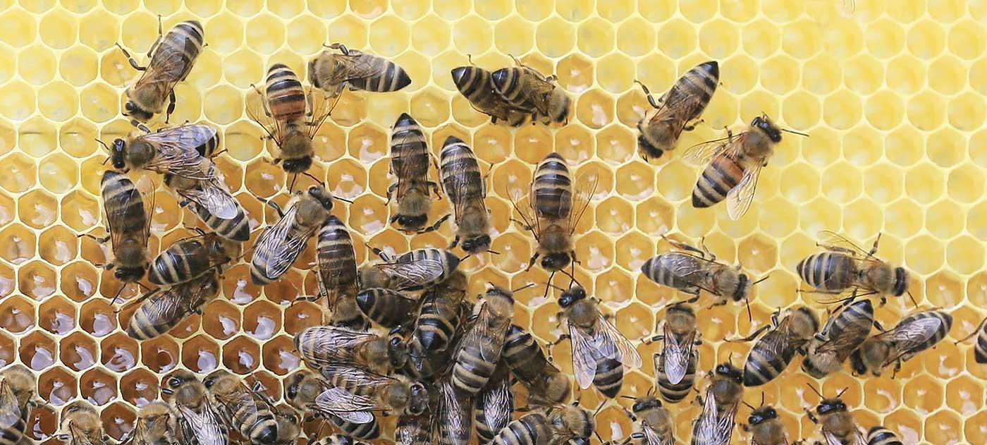 Ontdek de verzorgende eigenschappen van honing en meer bijenproducten